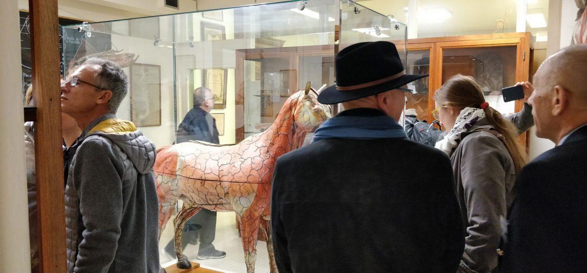 Visite du cheval du docteur Auzoux