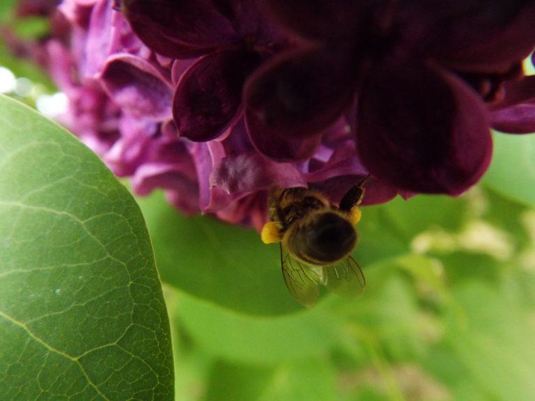 abeille-chez moi-heloise 3