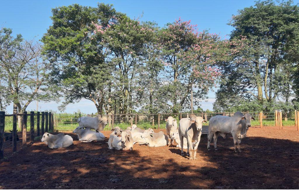 Visite d'une délégation de VetAgro Sup à Botucatu en avril dernier, où se trouve l'hôpital vétérinaire de l'UNESP